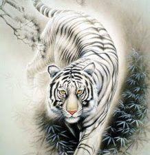 E' l'ora della tigre bianca un cammino tra sogno e realtà : COVID19